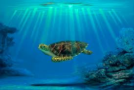 hawaii turtle painting featuring myrtle the turtle s mommy