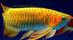Animasi Bergerak Wallpaper Ikan Hidup ...