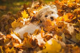 Image result for pile of leaves