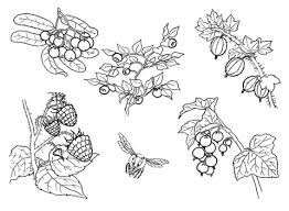 Fruit coloring pages vegetable coloring pages food coloring pages. Fruit And Vegetable Coloring Sheet Coloring Pages For Kids On Coloring Forkids Com