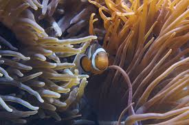 Free Images nature ocean structure sea animal coral reef