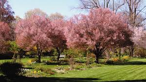 experience the fragrance of over 200 varieties of lilacs at new jersey botanical garden at skylands in ringwood state park photo by maja britton