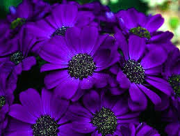 flower wall paper download 133 beautiful pictures of flower images wallpaper photos