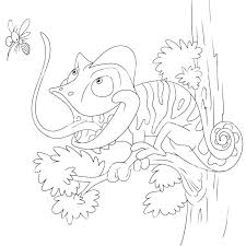 Chameleon Coloring Page Realistic Coloring Pages Chameleon Coloring