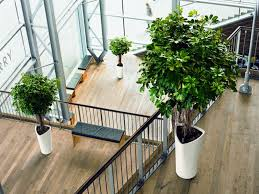 office greenery. Best-indoor-plants-1000x750 Office Greenery R