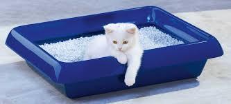 """Résultat de recherche d'images pour """"Litière de chat en silice"""""""