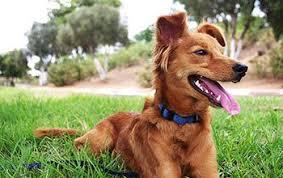 Telepathic Animal Communicator in Parkland, FL | Innate Animal Communication