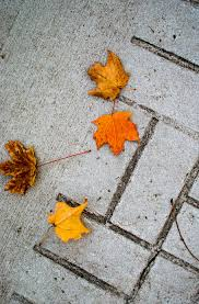 HD wallpaper: fall, leaves, colors ...