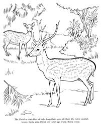 Small Picture How To Draw A Doe Coloring Coloring Pages