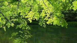 hd nature backgrounds 1080p. Wonderful 1080p Amazing Nature 3  Video Background HD 1080p To Hd Backgrounds A