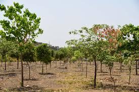 Tree Plantation Pune Municipal Corporation