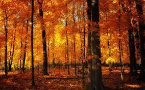 Aesthetic Autumn Wallpapers - Wallpaper ...