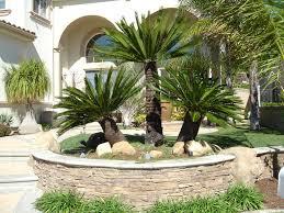 Small Picture Arizona Sago Palm Landscape Arizona Palm Trees Pinterest