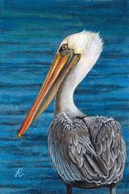 pelican painting florida pelican by peggy dreher