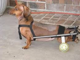 dog wheelchair parisons for