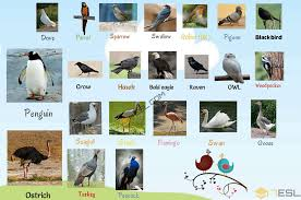 Birds Chart With Names In English Bird Names List Of Birds With Useful Birds Images 7 E S L