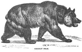 grizzly bear september 1856 hutchings ilrated california