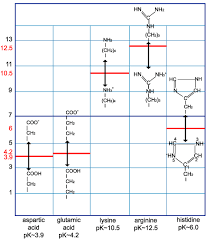 Amino Acid Characteristics Chart Imgt Education