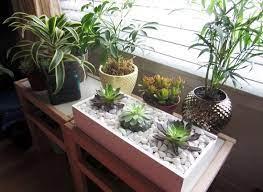 18 indoor rock garden ideas how to