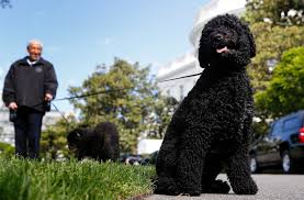 presidential pups bo and sunny have official white house schedules presidential pups bo and sunny have official white house schedules newshour
