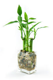 plants for windowless office. caring for this plant really couldn\u0027t be easier, a few points though: plants windowless office f