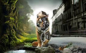 awesome tiger wallpaper for best wallpaper
