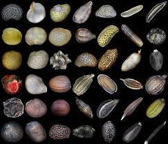 Seed Wikipedia