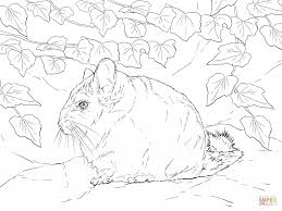 Small Picture Short Tail Coloring PageTailPrintable Coloring Pages Free Download