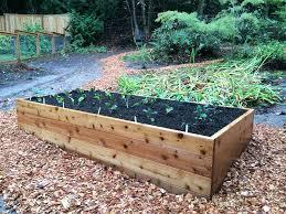 cedar garden bed nice cedar raised garden beds deer proof cedar complete raised garden bed kit