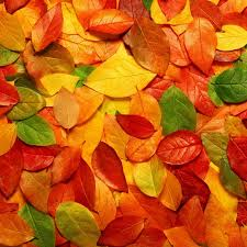 2048 X 2048 Autumn iPad 3 HD Wallpapers ...
