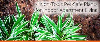 however not many people know which houseplants are safe for pets to consume and