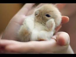 super cute baby bunnies. Beautiful Cute Super Cute Bunnies With Baby O