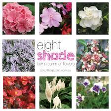 8 shade loving summer flowers aboutthegarden