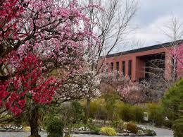石橋文化センター 梅まつり