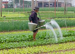 Deadly Diarrhea Caused By Wastewater Irrigation Of Crops Asian