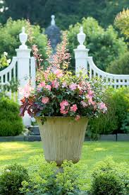 Small Picture Urn Container garden Flower Carpet Coral roses Heuchera