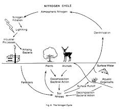 Co2 To O2 Conversion Chart The Nitrogen And The Oxygen Cycle With Diagram