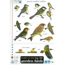 British Garden Birds Chart Field Guide Garden Birds