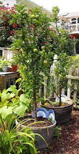 to grow an apple tree in a container