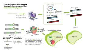 Genome Editing Genome Editing