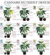 Cannabis Problem Chart 48 Experienced Jorge Cervantes Deficiency Chart