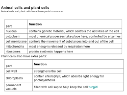animal cell part  description of a animal cell