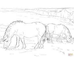 Twee Grazende Ponys Kleurplaat Gratis Kleurplaten Printen
