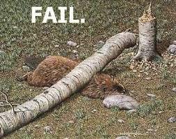 beaver-fail.jpg