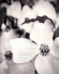 Anselic   Jana Powers   Flickr