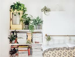 Plants In Living Room Interesting Design