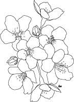 Small Picture Japanese Cherry Blossoms Coloring Page for Adults