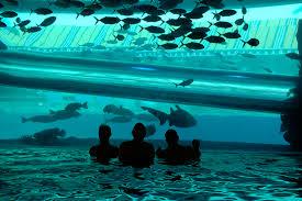 underwater water slide. Exellent Slide 504622024_0aa241c571_z Inside Underwater Water Slide T