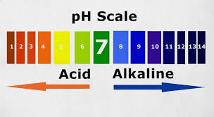 19 Highly Alkaline Foods That Will Benefit Your Body Yuri