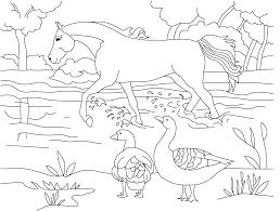 Gambar gambar binatang untuk anak untuk mewarnai lucu dan mendidik